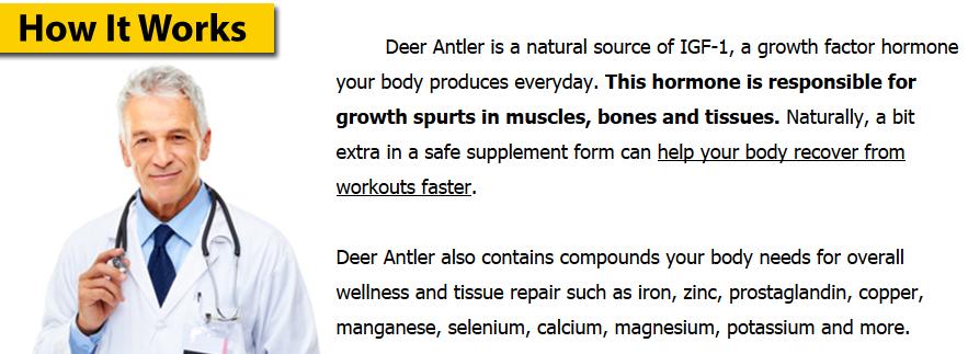 how deer antler works